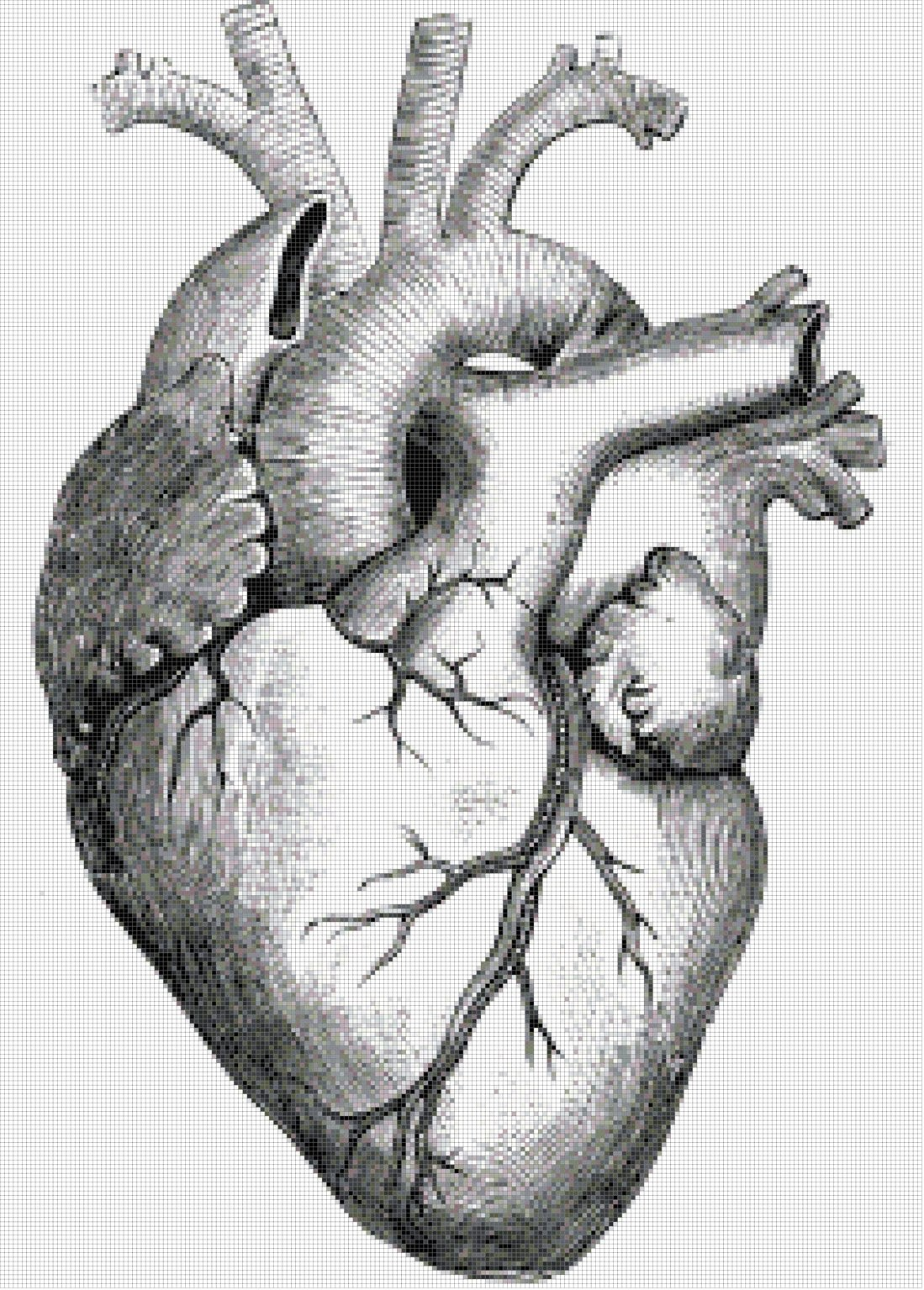 Heart with Ventricles Cross-Stitch Pattern https://www.etsy.com/listing/118012062/heart-with-ventricles-illustration-pdf?ref=shop_home_active_18