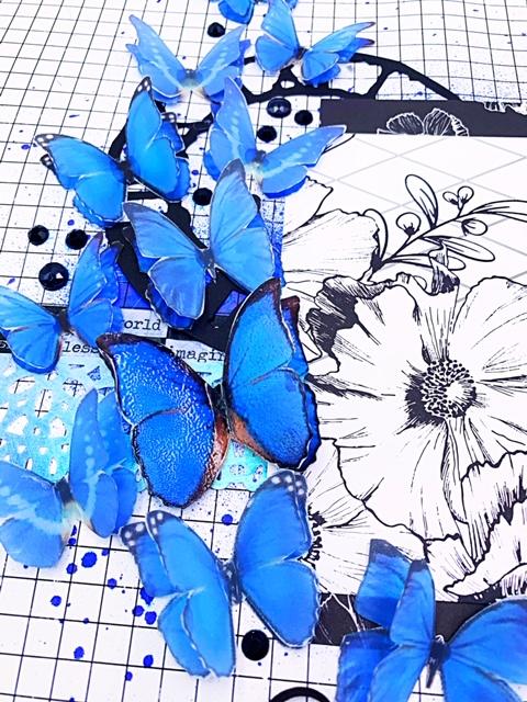 blue butterflies 1